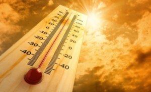 High Summer Temperature
